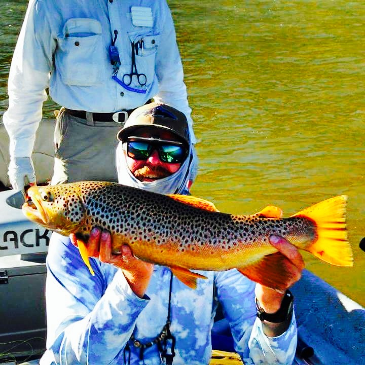 Wade's Big Brown
